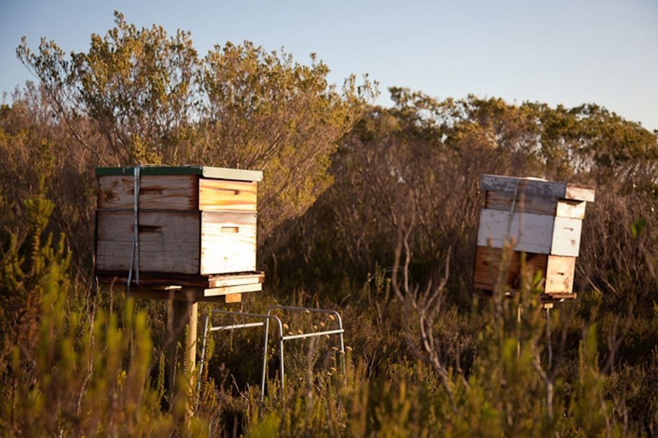 pic1337students-at-grootbos-learn-about-beekeeping-lr