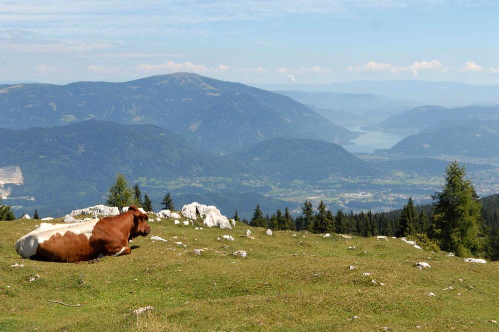 panorama dal Monte Dobratsch