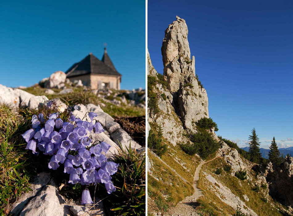 sentiero e fiori di montagna