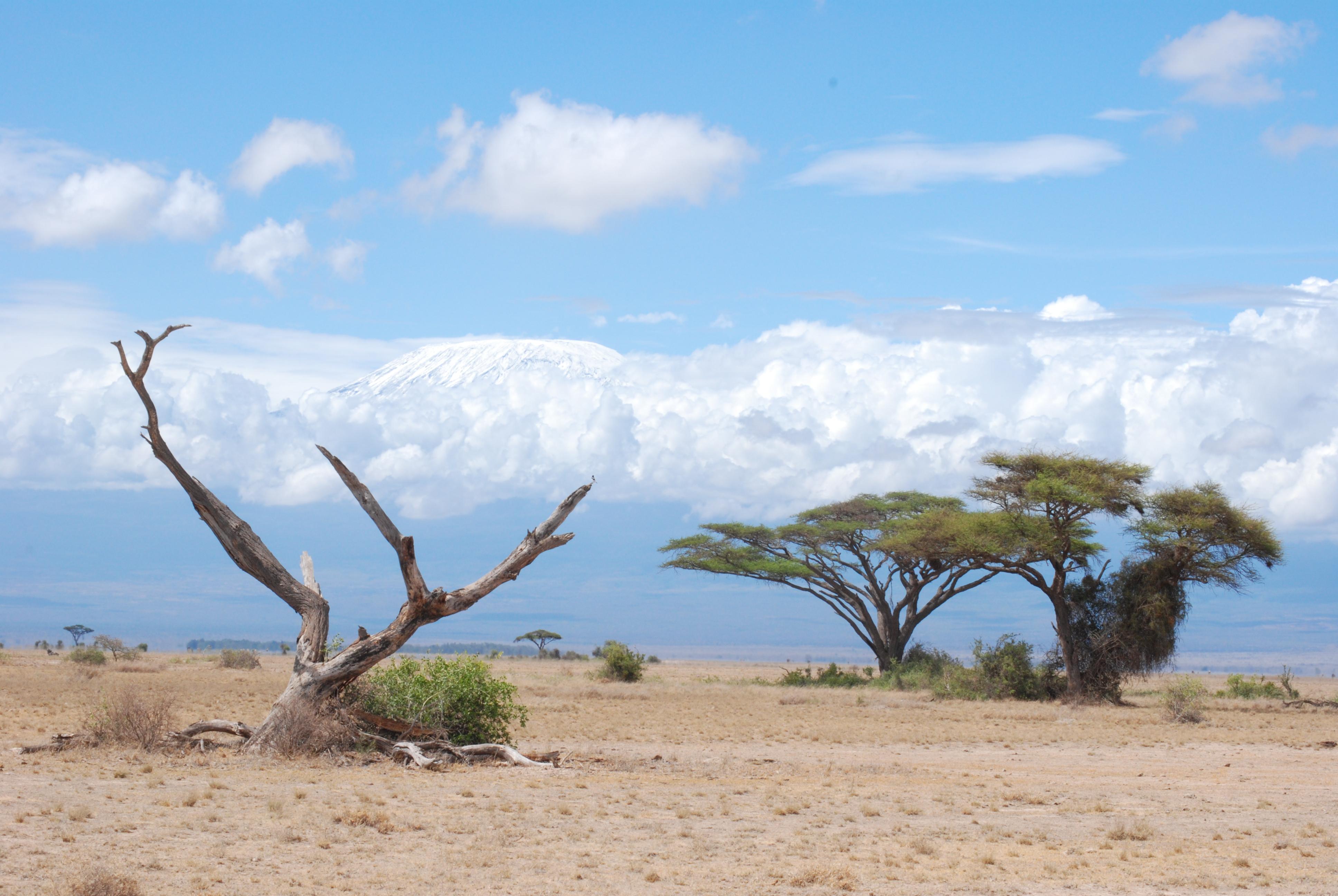 Pianura sullo sfondo del Kilimangiaro