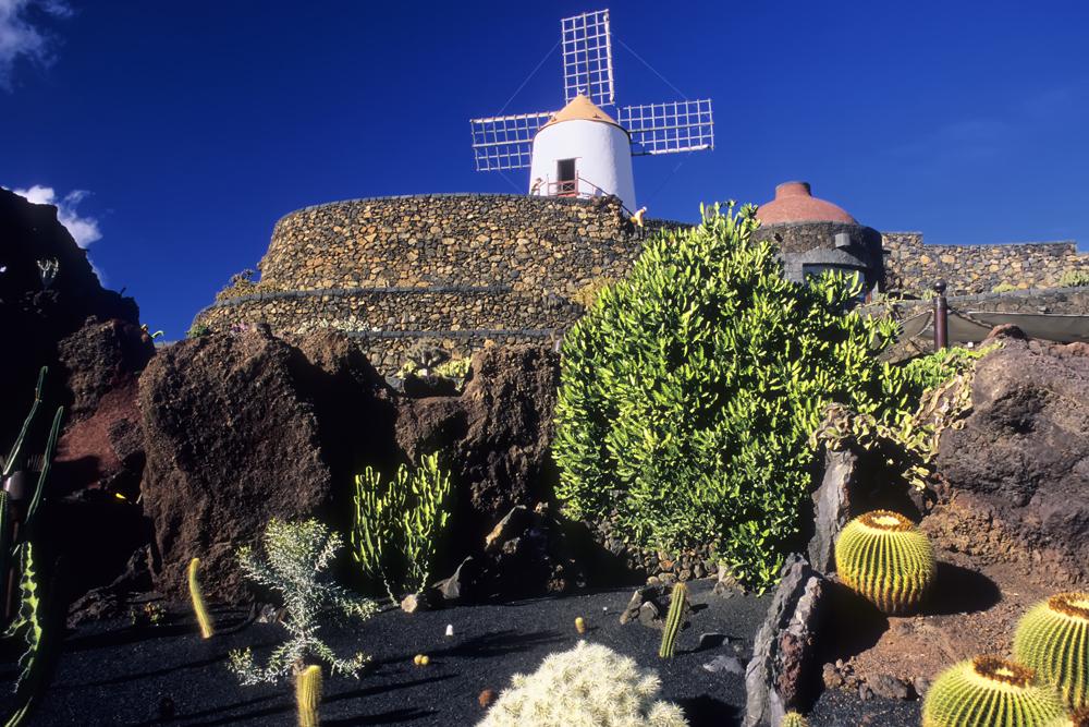 15_giardino-cactus