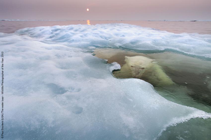 L'orso e l'acqua