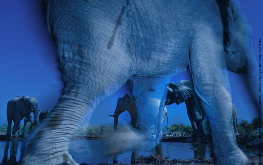 L'essenza degli elefanti