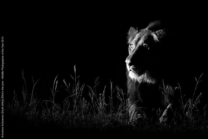 Uno scatto nel buio