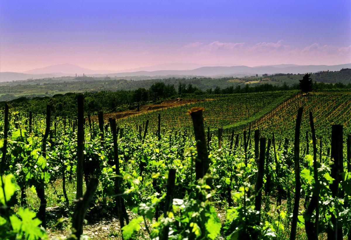 Le vigne di Tenuta Regaleali, Palermo