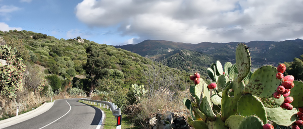 Sardegna-Strada-per-Olzai-6