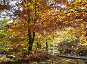 Foliage_Giardino_Botanico_Oropa