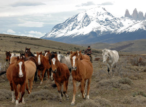 Patagonia-Ultima-Esperanza-300x221