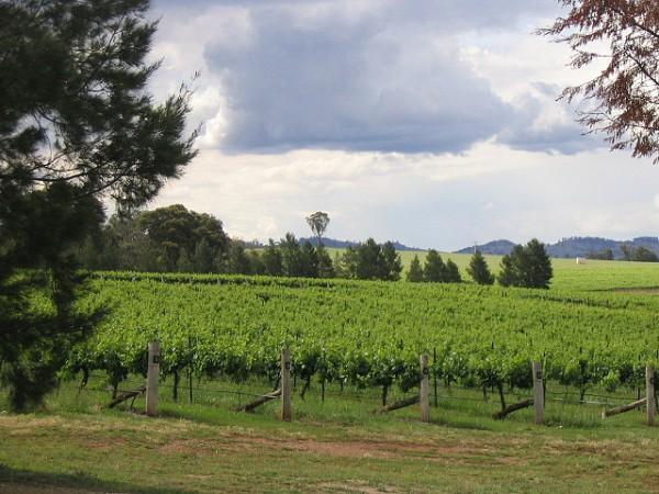 Mudgee wine region, New South Wales