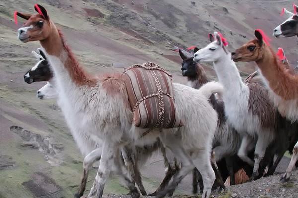 4_Peru