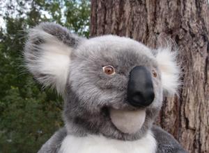 australia-bestjobs-koala