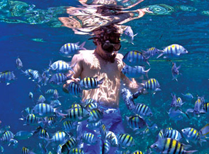 bvi-snorkel2