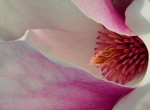 pisa in fiore mostra