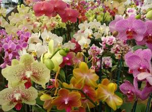 Flora-et-decora-fiori-1-e1363862824517