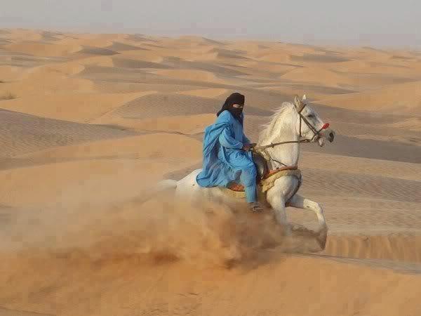 83_cavallo deserto 2_unstretched