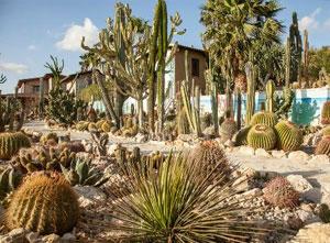 gardencactus
