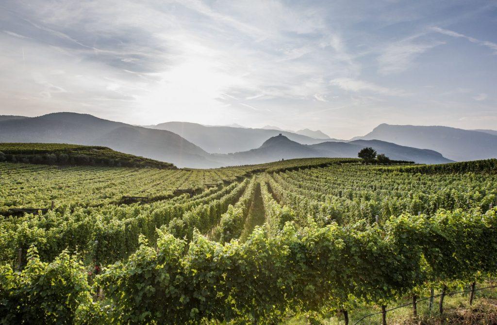 Alto-Adige_Vigne-in-Oltradige-EOS_Florian-Andergassen