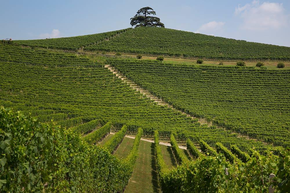 Cordero-di-Montezomolo-winery-cedar
