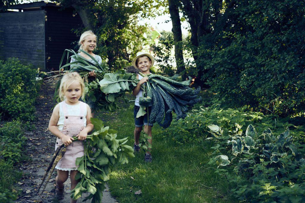 Foraging nei boschi della Danimarca