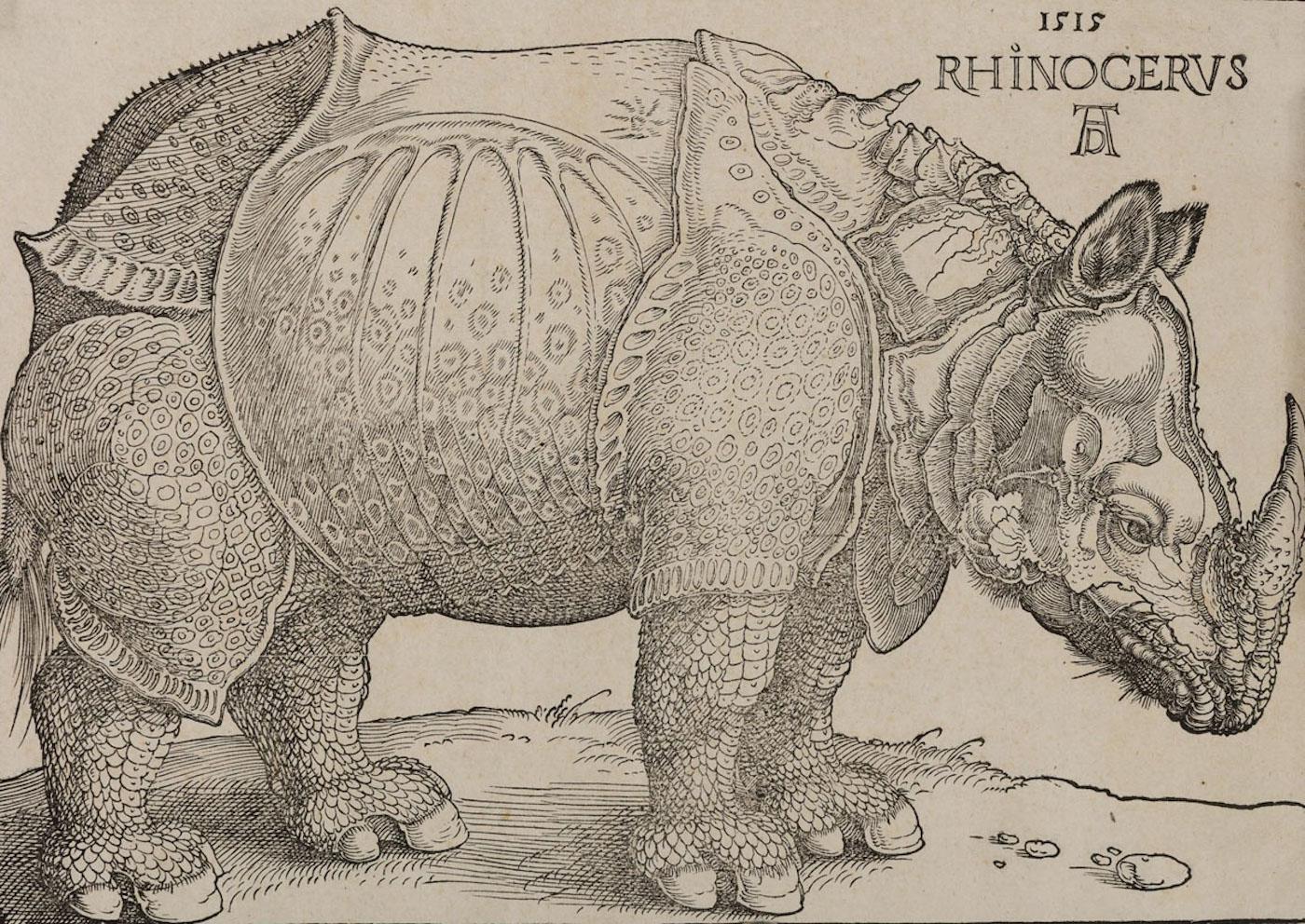 "Albrecht Dürer, ""Rinoceronte"", 1515, xilografia"