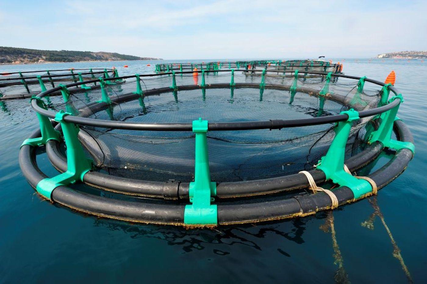 L'allevamento ittico Fonda