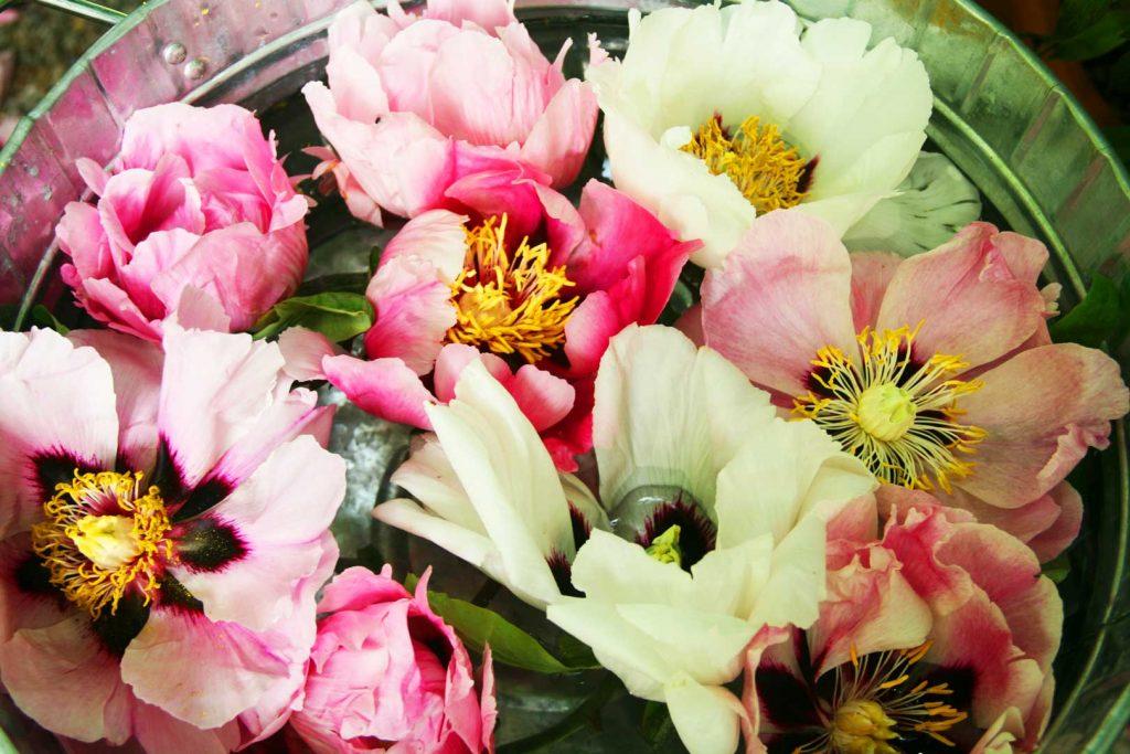 orticale-secchio-fiori