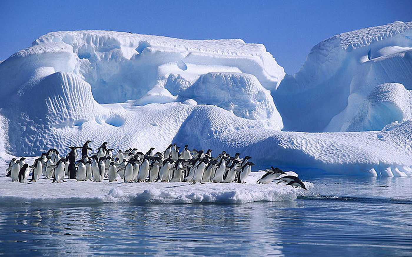 pinguini-penguins-Hope-Bay-antartica