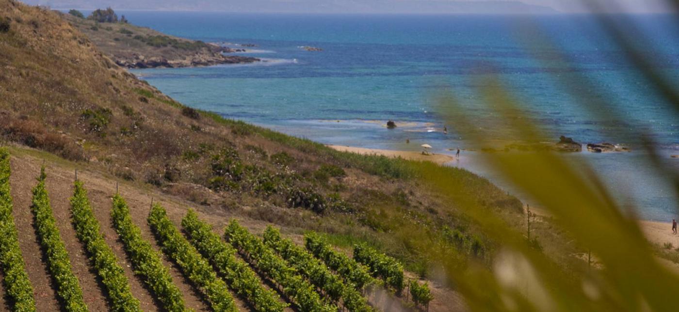 sicilia-mandrarossa-menfi-vigneto-mare-spiaggia