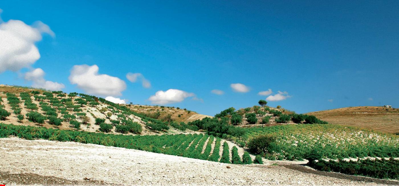 sicilia-menfi-vigneti-mandarossa