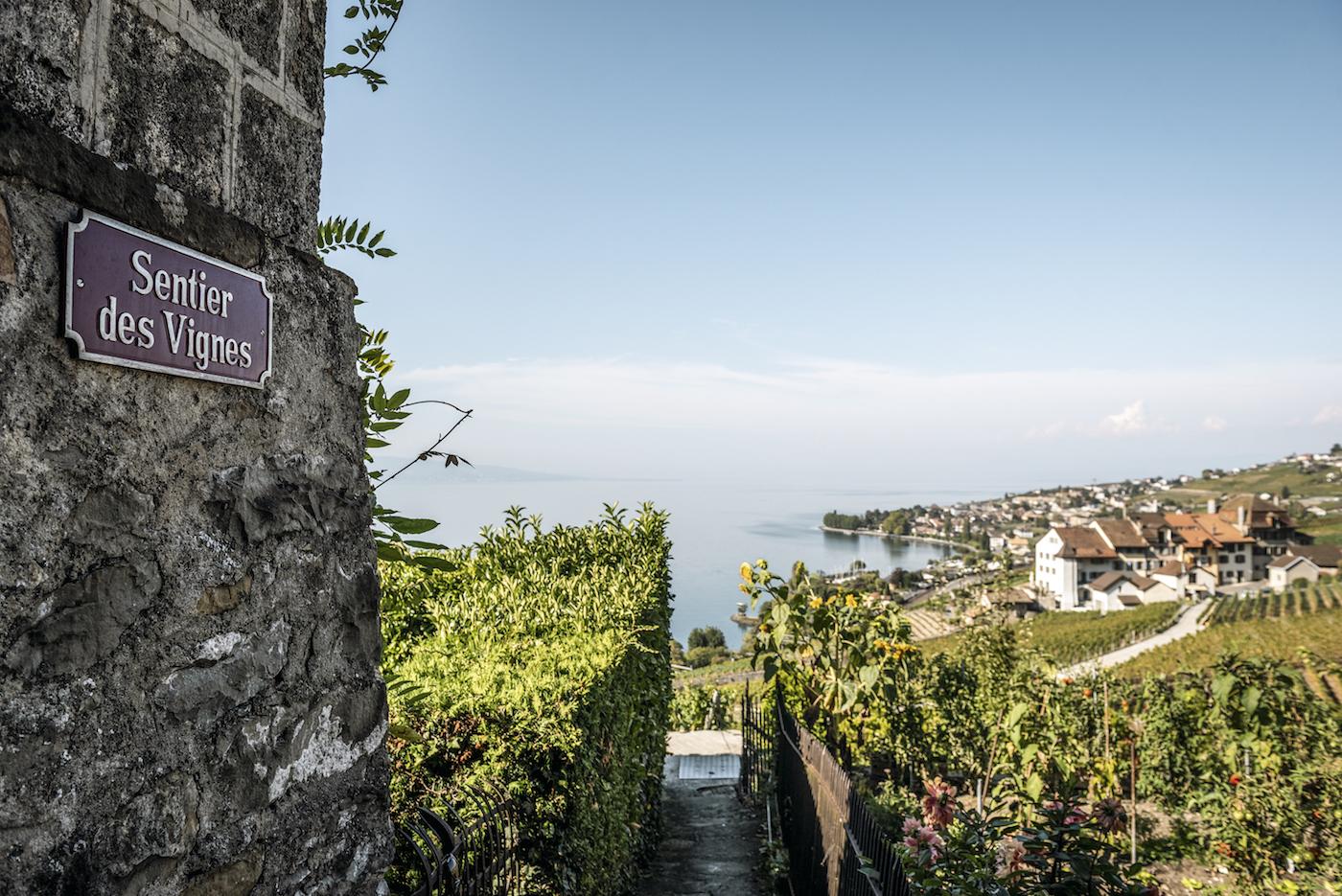 Il Sentiero delle vigne tra i filari del Lavaux