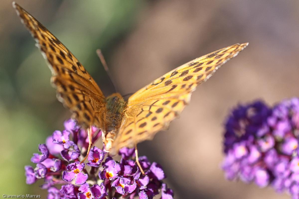 Berchidda - Monte Limbara Giardino delle Farfalle