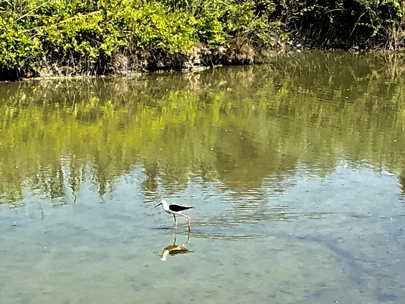 La Riserva naturale della Valle Canal Novo a Marano Lagunare